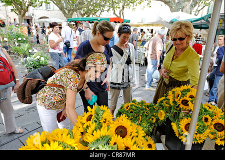 France Gard Uzes listed as town of art and history sunflowers bouquet on Place aux Herbes market among scents of - Stock Photo