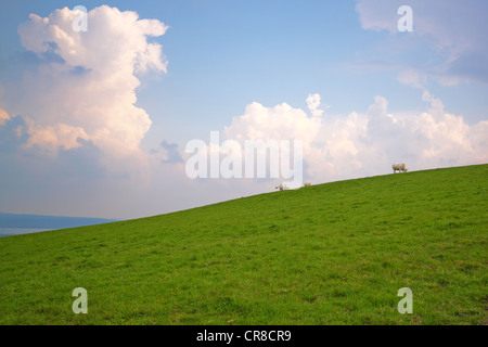 Cows grazing on a slope, under a cloudy sky - Stock Photo