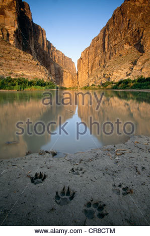 Coyote tracks on the banks of the Rio Grande, Big Bend National Park, Texas, USA - Stock Photo
