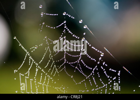 Dewdrops on spider web. - Stock Photo