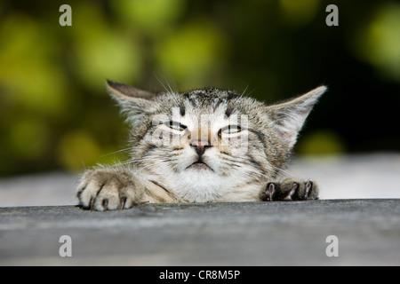 Kitten peeking over fence - Stock Photo