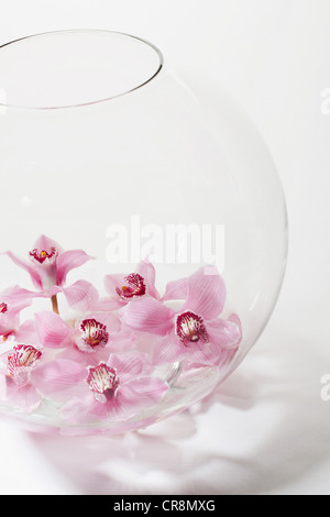 Pink flowers in glass bowl