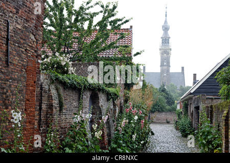 Romantic alley with hollyhocks, behind the late-Gothic town hall tower, Stadthuis town hall, historic town of Veere, - Stock Photo