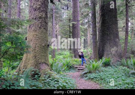 Randy Stoltmann Commemorative Grove, Sitka Spruce trees, Carmanah Walbran Provincial Park, British Columbia, Canada - Stock Photo