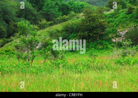 Velvet Bottom SWT nature reserve. - Stock Photo