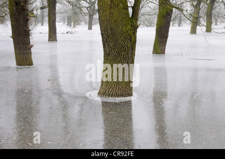 Frozen floodwater in the Middle Elbe Biosphere Reserve, Dessau, Saxony-Anhalt, Germany, Europe - Stock Photo