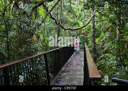 Wooden walkway in the rainforest, at the Barron Falls near Kuranda, Barron Gorge National Park, Queensland, Australia - Stock Photo