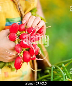 Close-up on ripe radish, woman gardener growing organic green vegetables, healthy eating concept, female holding - Stock Photo