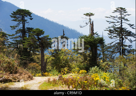 mountain scenery at Pele La pass (3420m), Black Mountains, Bhutan Asia - Stock Photo