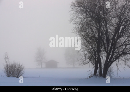 Snow-covered pastures covered by dense fog - Stock Photo