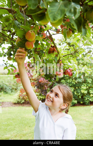 Girl picking fruit from tree in meadow - Stock Photo