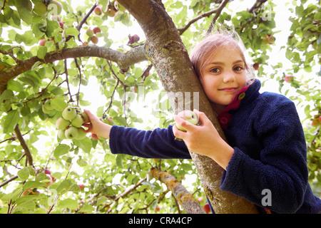 Smiling girl picking fruit from tree - Stock Photo