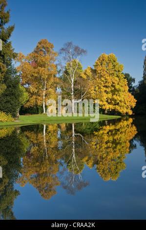 Autumnal trees, reflected in water, Insel Siebenbergen, Karlsaue park, Kassel, North Hesse, Germany, Europe - Stock Photo