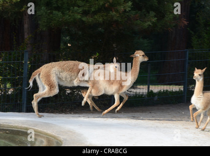 Animals from the Zoo Wilhelma , located in Stuttgart-South Germany - Stock Photo