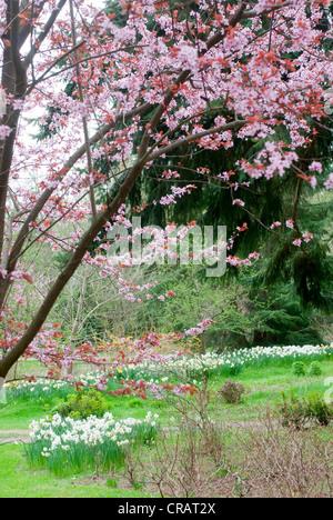 Meerkerk Rhododendron Gardens; near Coupeville; Whidbey Island ...
