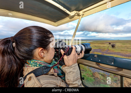 Young photographer taking pictures of a buffalo from a safari bus, Lake Nakuru National Park, Kenya, East Africa, - Stock Photo
