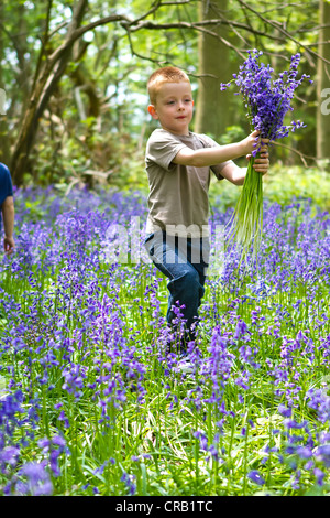 boys playing in bluebell woods - Stock Photo