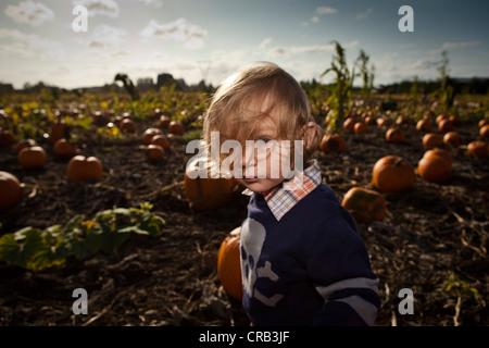 Little boy in pumpkin patch. - Stock Photo