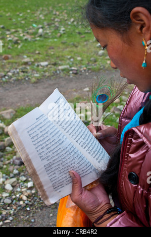 Young woman reading Tibetan scriptures with peacock feather in hand, Kailash Kora, Western Tibet, Tibet, Asia