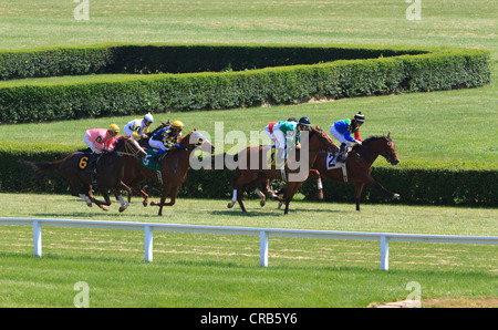 Horses racing on a grass surface. - Stock Photo