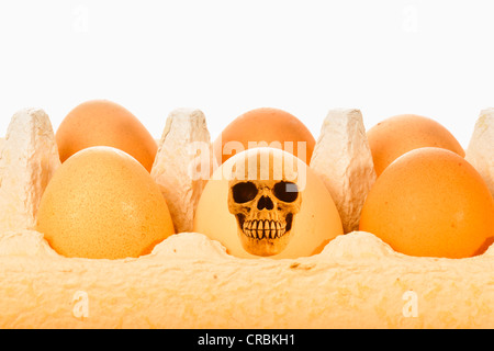 Skull, egg, symbolic image for contaminated food, dioxin contamination, animal feed scandal - Stock Photo