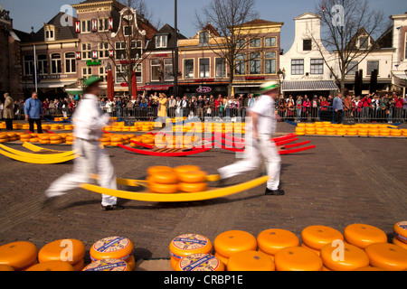 Cheese carriers on the cheese market in Alkmaar, North Holland, Netherlands, Europe - Stock Photo