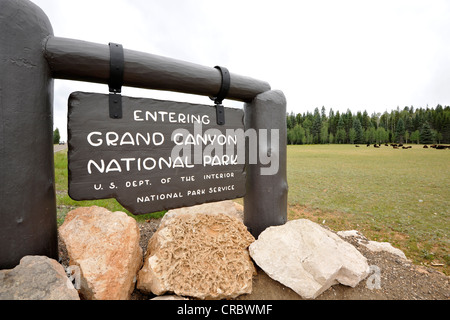 Entrance sign to Grand Canyon National Park, North Rim, Beefalos or Cattalos on the paddock at the rear, a crossbreed - Stock Photo