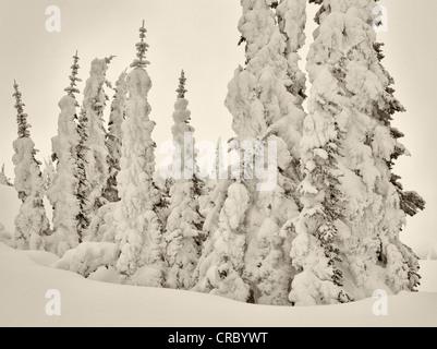 Heavy snow on trees. Mt. Rainier National Park, Washington - Stock Photo