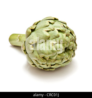 Globe artichoke isolated on a white studio background. - Stock Photo