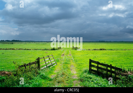 Dirt path in rural meadow - Stock Photo
