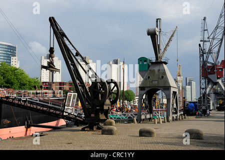 Cranes in Leuvehaven harbour, part of the Maritime Museum, Central Rotterdam, Holland, Nederland, the Netherlands, - Stock Photo