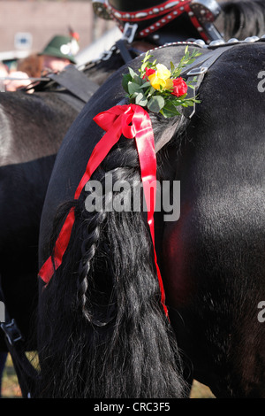 Elaborately decorated tail of a horse, Leonhardi procession, Bad Toelz, Isarwinkel, Upper Bavaria, Bavaria, Germany, - Stock Photo