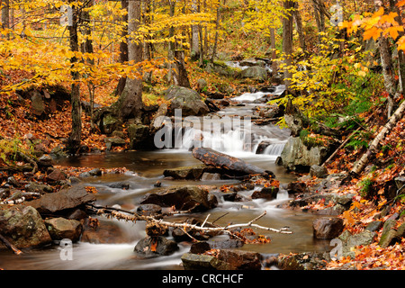 Small stream flowing through a colourful autumn forest, Laurentides, Quebec, Canada - Stock Photo