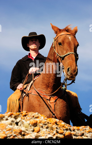 Cowboy on a horse looking into the distance, Saskatchewan, Canada, North America - Stock Photo