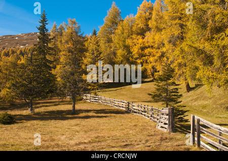 Cultural landscape with larches, Laerchenwiesen larch meadows, Obernbergtal, Tyrol, Austria, Europe - Stock Photo