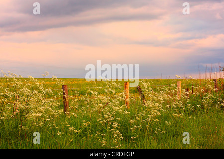 Scenic Scottish landscape with wildflowers - Stock Photo