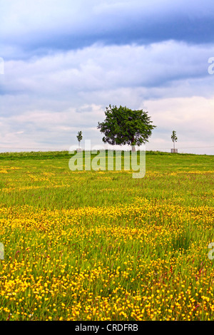 Scenic Scottish landscape with wildflowers and a lonely tree - Stock Photo