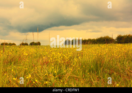 Scenic Scottish landscape with meadow of buttercups - Stock Photo