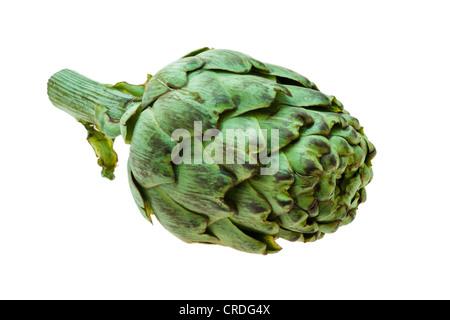 Artichoke (Cynara cardunculus, syn. Cynara scolymus) - Stock Photo