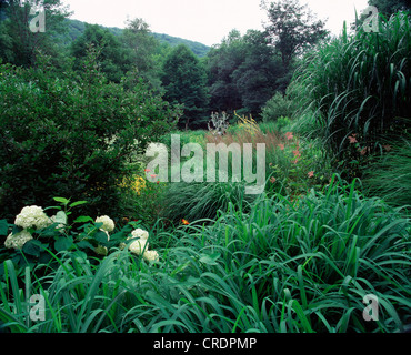 PERENNIAL BORDER WITH HYDRANGEA, SARGENT CRAB APPLE, AND MULTIPLE DECORATIVE GRASSES. - Stock Photo