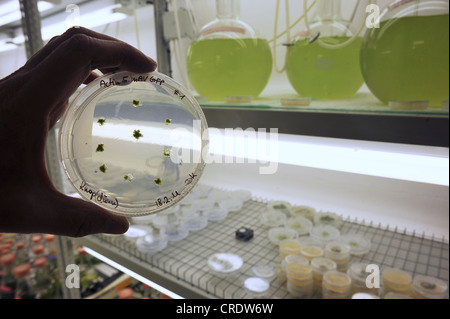 Scientist examining a specimen in a Petri dish with green plants