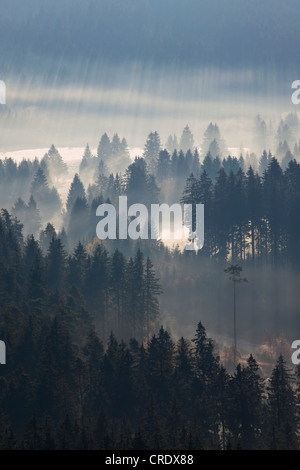 Sun rays in a forest with early morning fog at Schluchsee Lake in the Black Forest, Baden-Wuerttemberg, Germany, - Stock Photo
