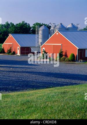 OUTSIDE VIEW OF BROILER HOUSES, 414 FEET LONG / PENNSYLVANIA - Stock Photo