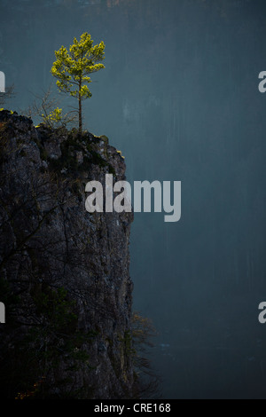 Lonely tree on the Schaufelsen rock in the Danube valley, Baden-Wuerttemberg, Germany, Europe