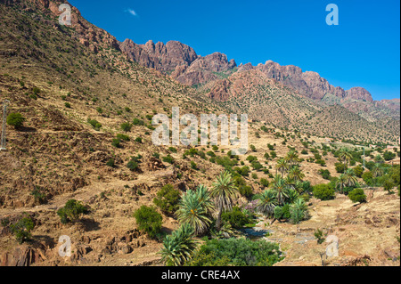 Typical mountain landscape with a dry river bed where Argan Trees (Argania spinosa) and Date Palms (Phoenix dactylifera) - Stock Photo