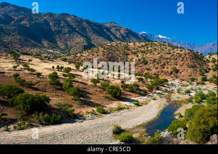 Typical mountain landscape with a river bed and Argan Trees (Argania spinosa), Anti-Atlas Mountains, Valley of the - Stock Photo