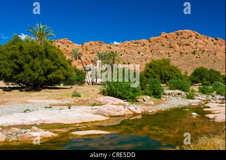 Typical mountain landscape with a river bed, Date Palms (Phoenix) and Argan Trees (Argania spinosa), Anti-Atlas - Stock Photo
