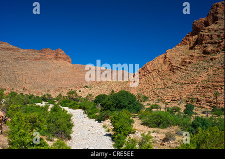 Palm trees, bushes and trees growing in a dried river bed in Ait Mansour Valley, Anti-Atlas Mountains, southern - Stock Photo