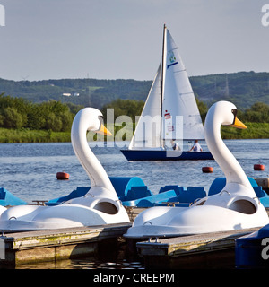 swan-shaped pedal boats on Kemnader Stausee, Germany, North Rhine-Westphalia, Ruhr Area, Witten - Stock Photo