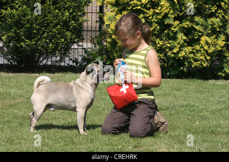 Pug (Canis lupus f. familiaris), male dog, one year old, playing in the garden with a girl - Stock Photo